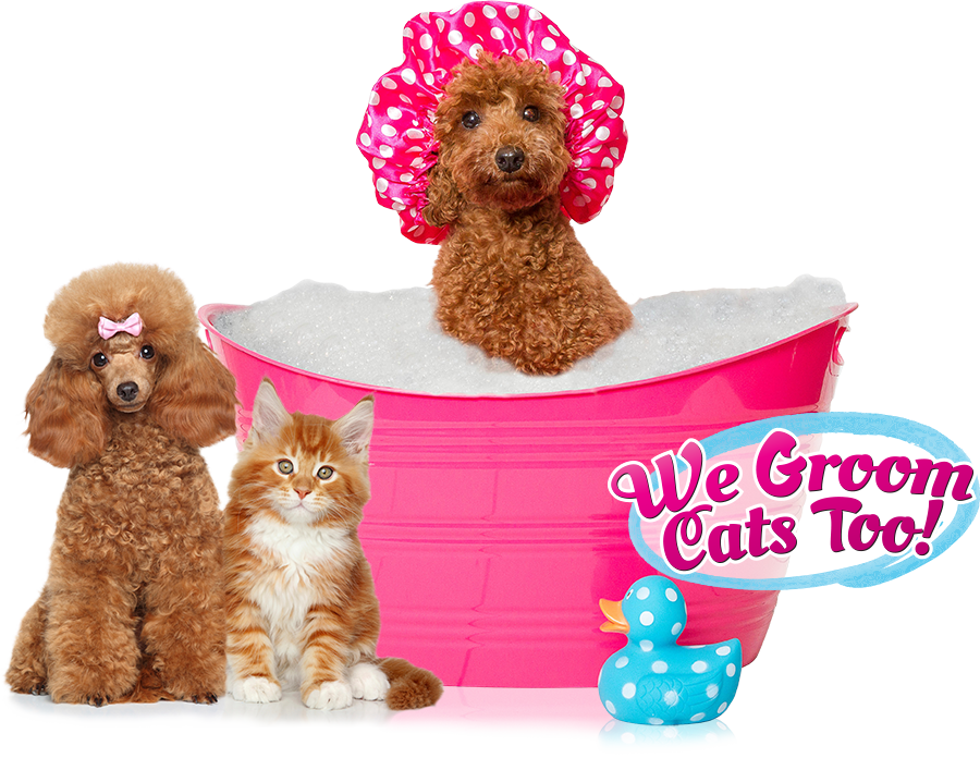 Stupendous Posh Pawz Pet Spa Let The Groomer Come To You Home Interior And Landscaping Analalmasignezvosmurscom